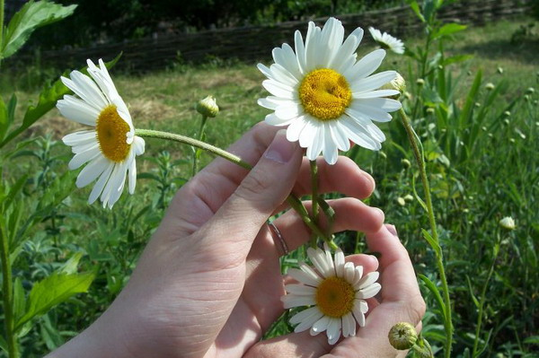 смайлик из цветов: