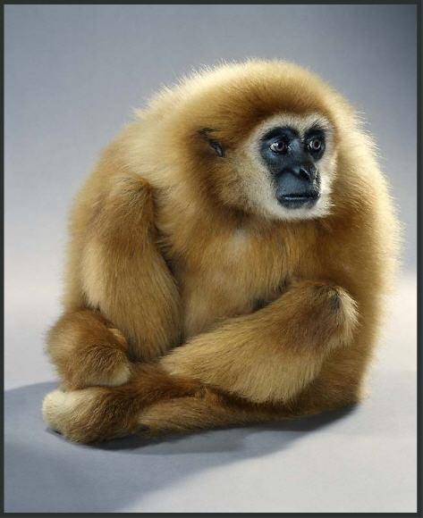 Прикольные фото обезьянок