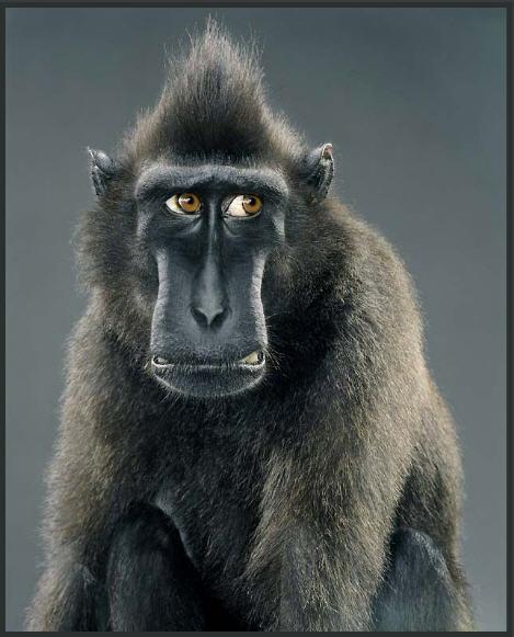 прикольные картинки обезьянок: