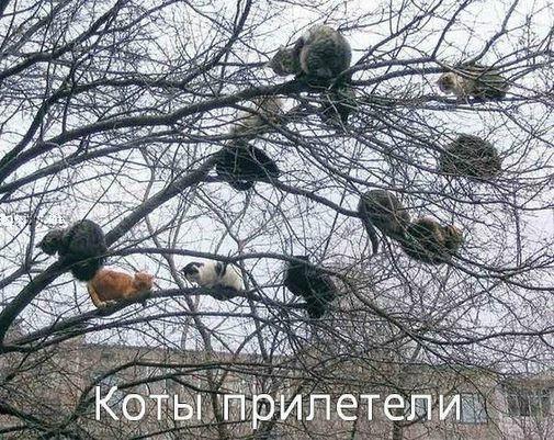 Котеги...