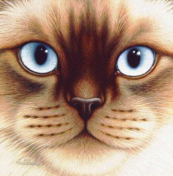 Кошки Braldt Bralds'а