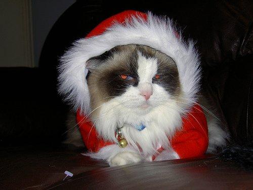 Новогодние коты 5 фото новогодние коты
