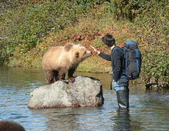 Медведи ... Камчатка