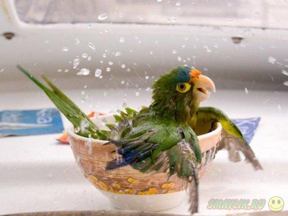 Пост о попугаях
