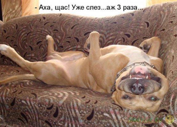 Собакоматрица