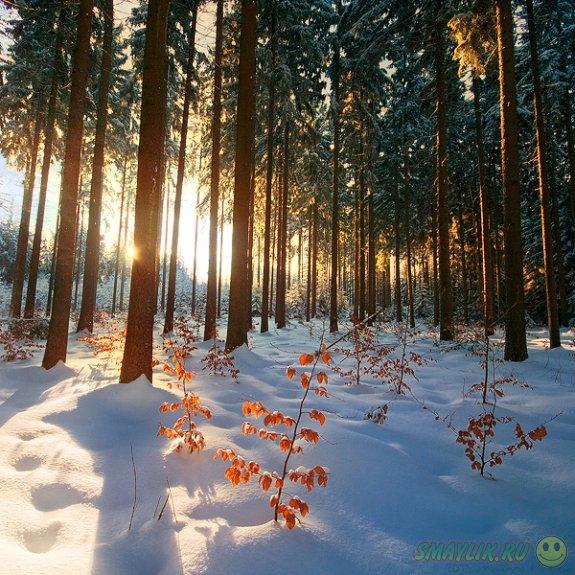 Воспоминания о зиме и не только