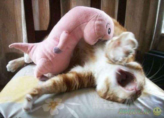 Веселые кошки