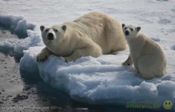 Медвежья любовь