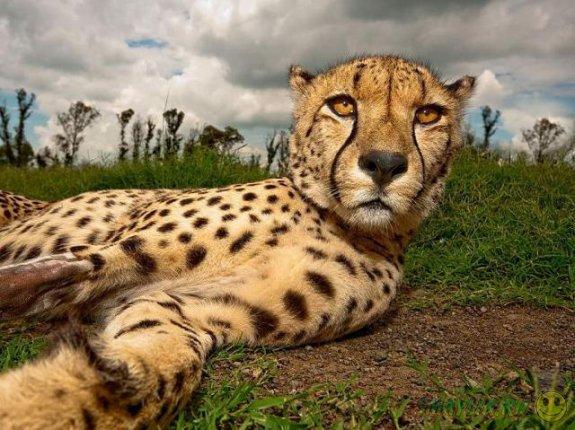Лучшие фотографии National Geographic за август 2011г