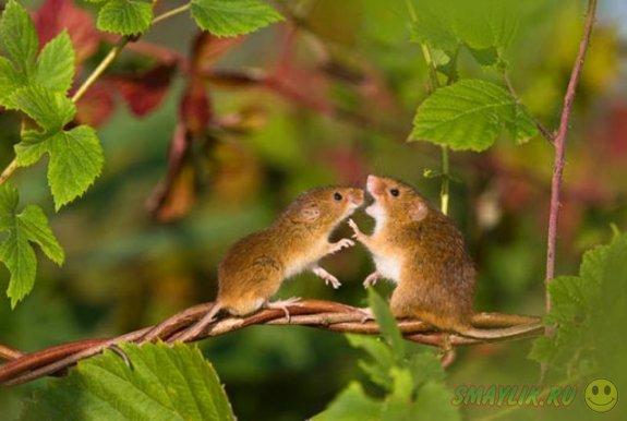 Мышки