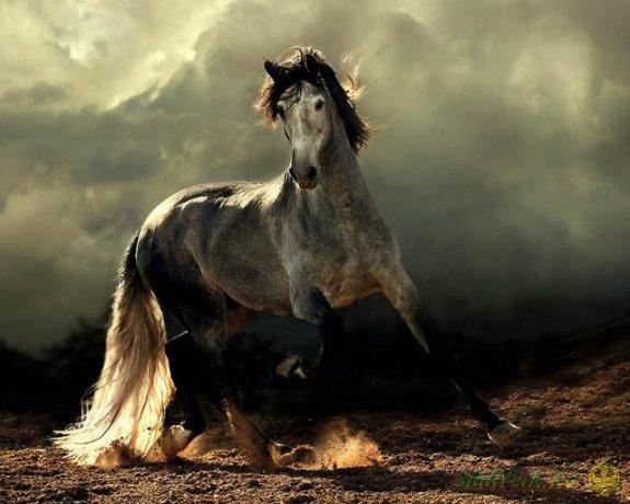 Сказачная красота лошадей