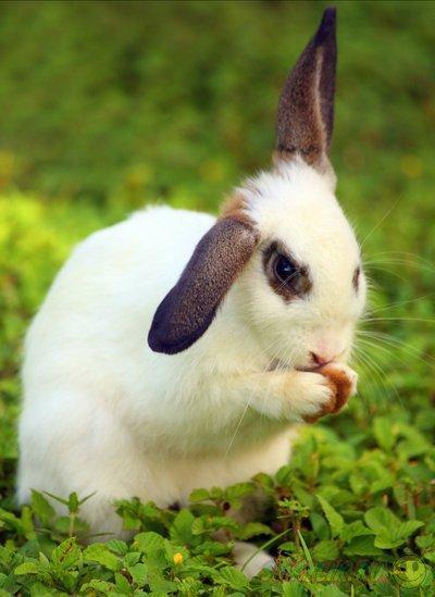 Зайчата