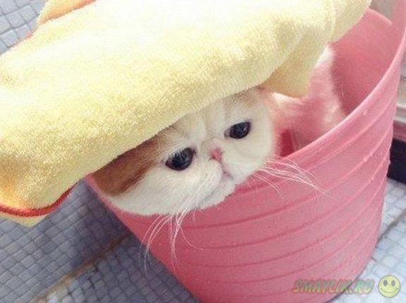 Нереально няшный кот