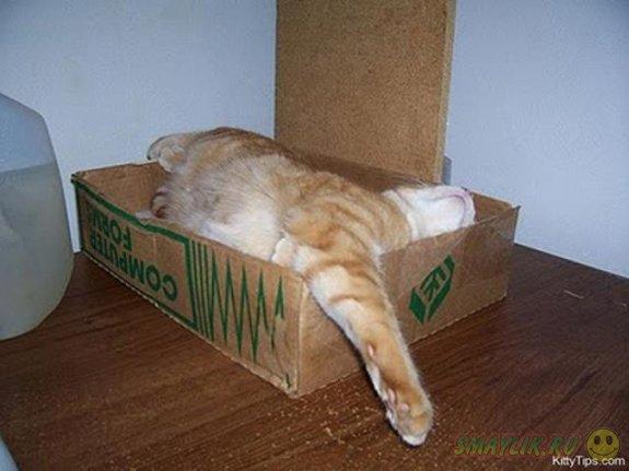 Как спят коты?