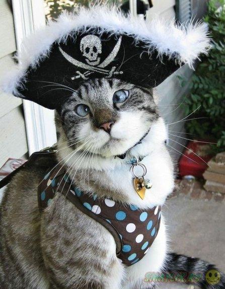 Милый косоглазый кот