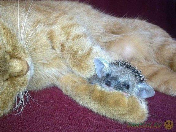 Добрая кошка-мать