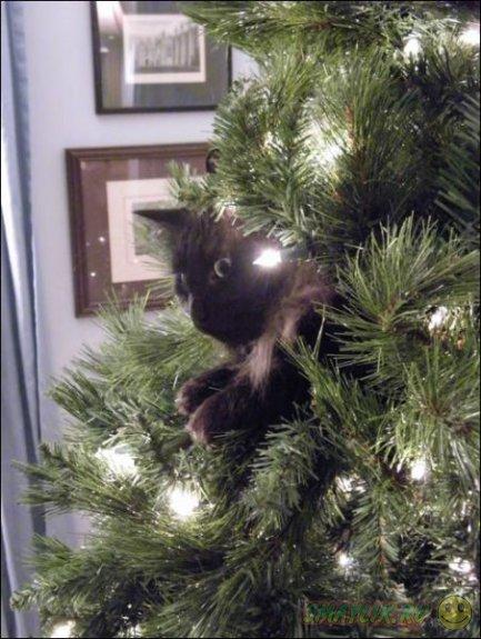 Роль кошки в Новый год