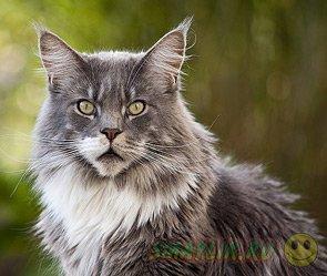 Жительница Екатеринбурга взяла кредит на покупку кота