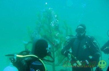 Новогодняя елка под водой появилась в Боснии и Герцеговине