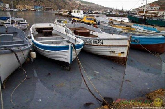 Балаклавскую бухту оккупировали миллионы медуз