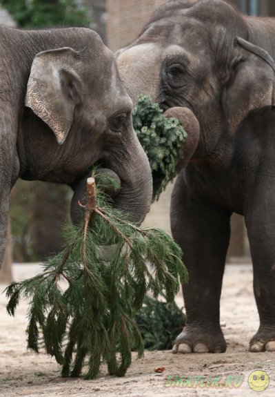 Новогодние елки для питомцев  зоопарка Берлина