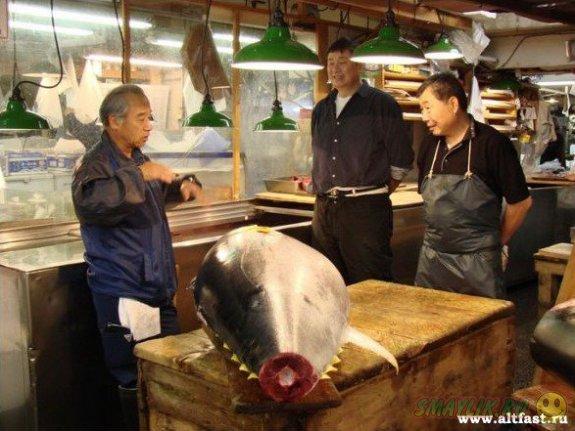 В Токио  тунец-рекордсмен ушел с молотка почти за 2 млн долларов