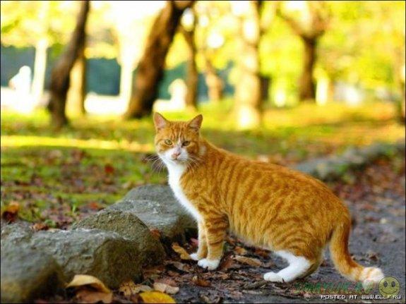 Для любителей котов создали  специализированную социальную сеть