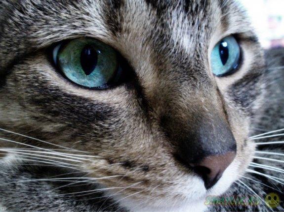 Кот случайно вызвал группу быстрого реагирования в ломбард