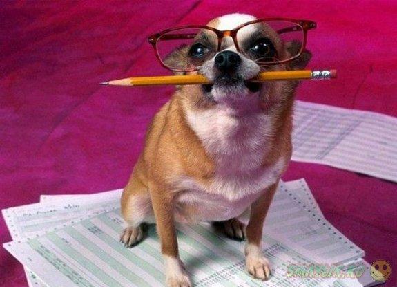 Собачьи способности выше, чем думают люди