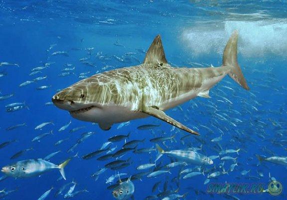 В Австралии  британский турист  оттащил темную акулу от пляжа за хвост