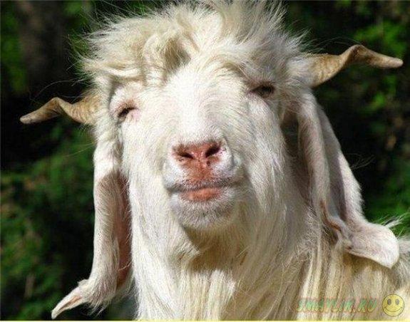 Суд в Австралии оправдал любителя цветов - козла Гэри
