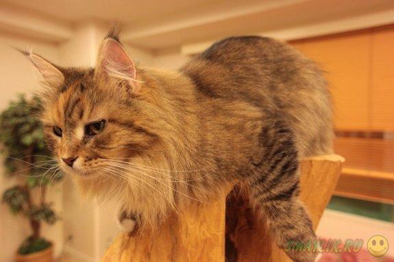 Японская компания построила идеальный дом для  кошек