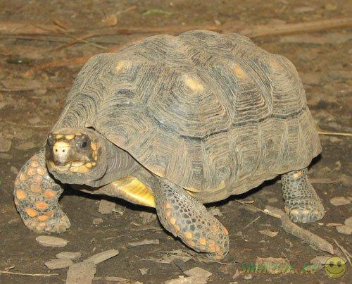 В Бразилии семья нашла  свою черепаху, потерявшуюся 30 лет назад