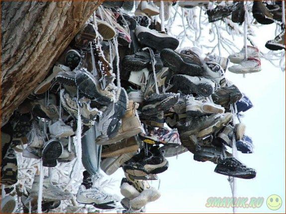 """Необычное """"дерево ботинок"""" растет в одном из итальянских городков"""
