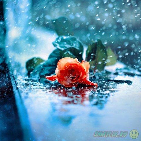 Удивительные цветы польской фотохудожницы