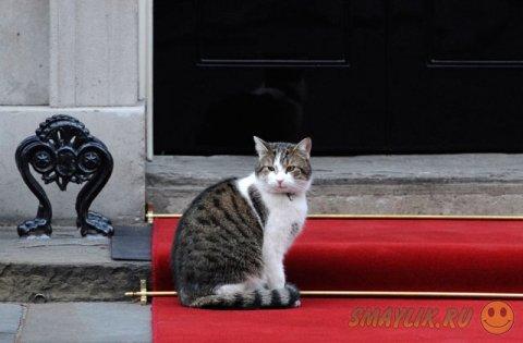 Кота премьер-министра Великобритании не хотели пускать в МИД