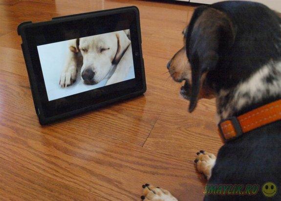 В  США и Израиле у собак появится собственный телеканал