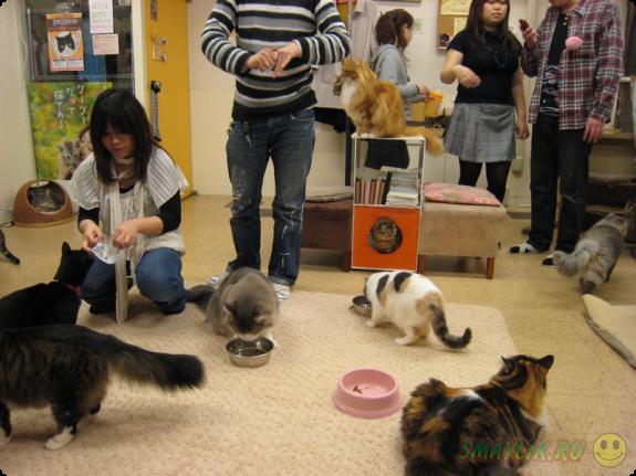 В Лондоне откроется первое британское кафе с кошками