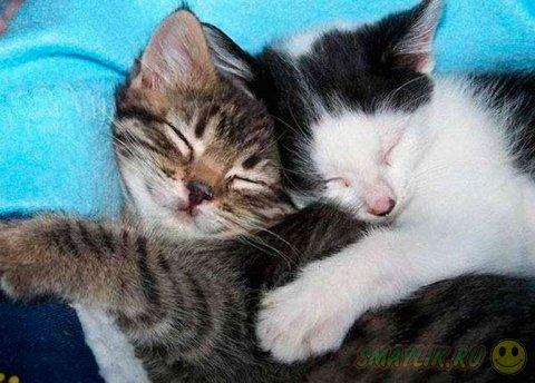 Котята тоже очень любят обниматься