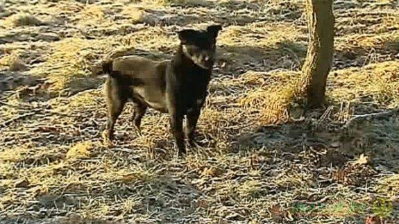 В Польше дворовой пес спас жизнь трехлетней девочке