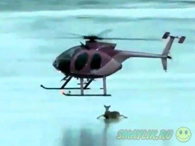 В Канаде находчивость пилота вертолета спасла олениху