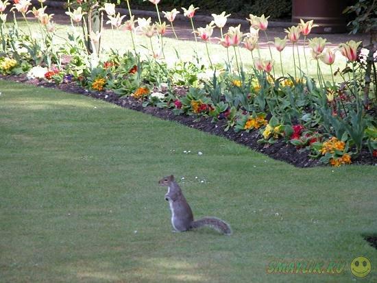 Британку обвинили в воровстве цветов из соседского сада