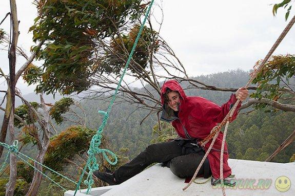 В Австралии общественной активистке пришлось впервые за 15 месяцев спуститься с дерева