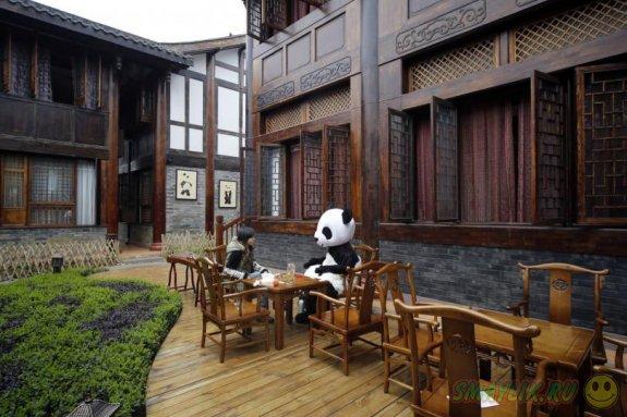 В провинции Китая появится  тематический отель для любителей панд