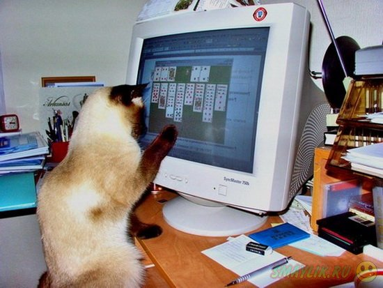 Кошкам придумают компьютерные игры