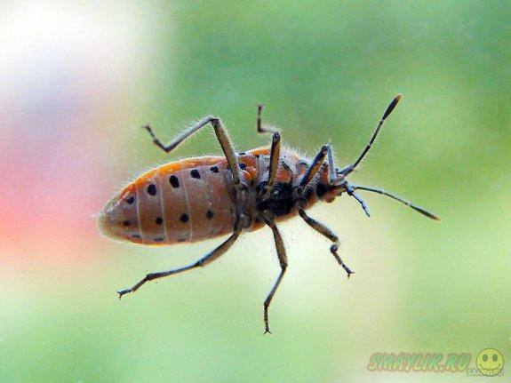 Тараканы вызвали панику среди пассажиров автобуса