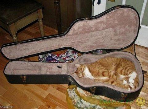 Уютное место для кошки