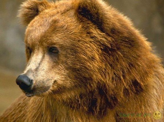 Медвежата забрались пообедать в дом жителя штата Калифорния