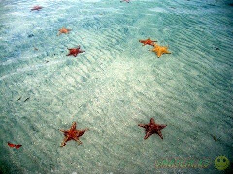 Морские звезды у берега Бока-дель-Драго