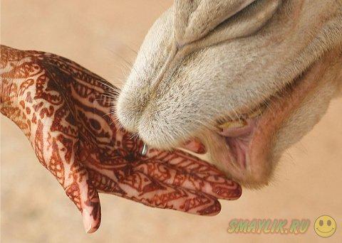 Менди - древнейший способ украшения тела